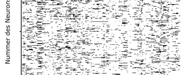 Die Signalübertragung im Gehirn folgt einer äußerst chaotischen Dynamik. Zu diesem Ergebnis kommen Wissenschaftler des Max-Planck-Instituts für Dynamik und Selbstorganisation, der Universität Göttingen und des Bernstein Center for Computational Neuroscience […]